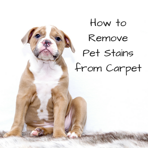 remove-pet-stains-carpet
