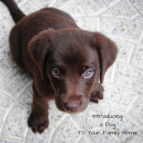 introducing-dog-family-home