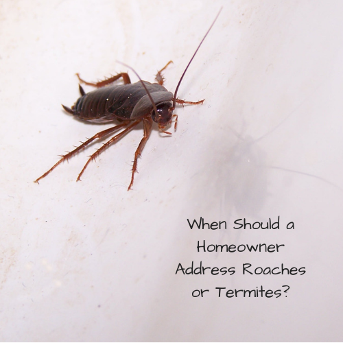 homeowner-address-roaches-termintes