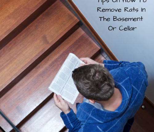 remove-rats-basement-cellar