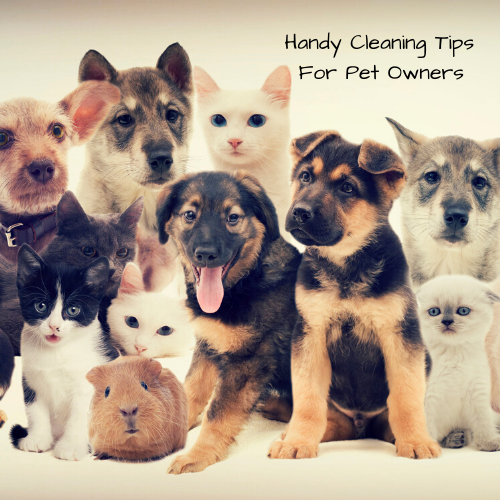 cleaning-tips-pet-owners