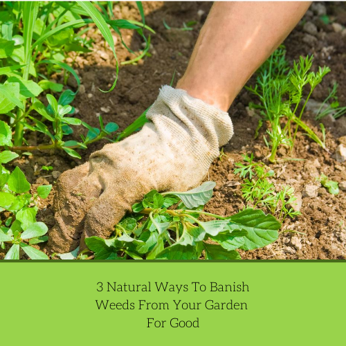 3-natural-ways-to-banish-weeds-from-your-garden-for-good-2