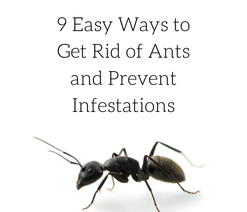 get-rid-ants-prevent-infestations
