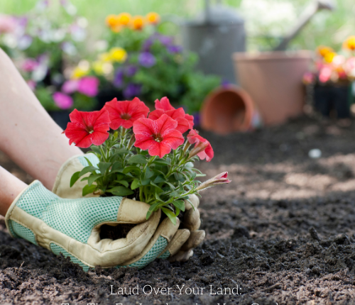 laud-over-your-land-top-tips-for-landscaping-your-garden