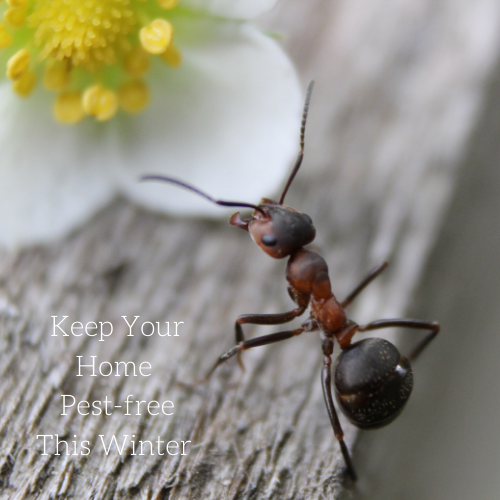 keep-your-home-pest-free-this-winter-2