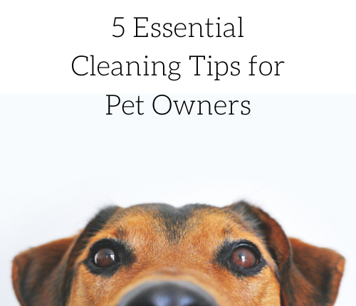 5-essential-cleaning-tips-for-pet-owners-2