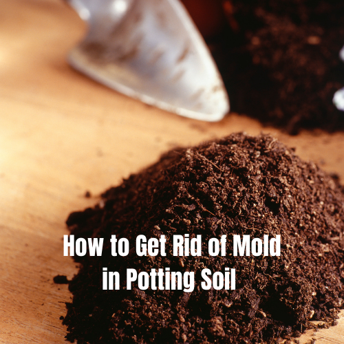 how-to-get-rid-of-mold-in-potting-soil-2