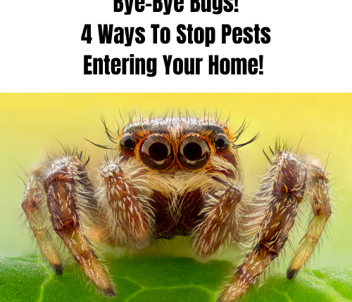 bye-bye-bugs-4-ways-to-stop-pests-entering-your-home