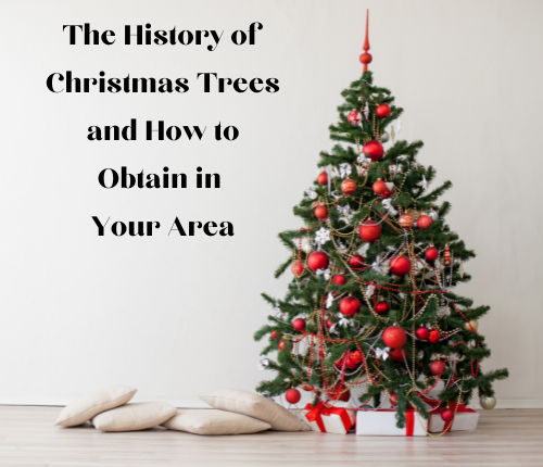 the-history-of-christmas-trees-and-how-to-obtain-in-your-area-2